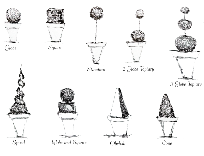 common boxwood topiary shapes: globe, square, standard, 2 globe topiary, 3 globe topiary, spiral, globe and square, obelisk, cone