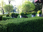 gorgeous boxwood topiary and hedge landscape
