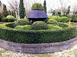 vardar valley boxwood hedge