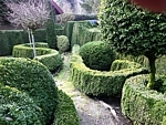 boxwood hedges and topiary, landscape