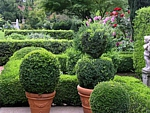stone planters with boxwood topiary and hedges