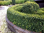 boxwood hedge and topiary