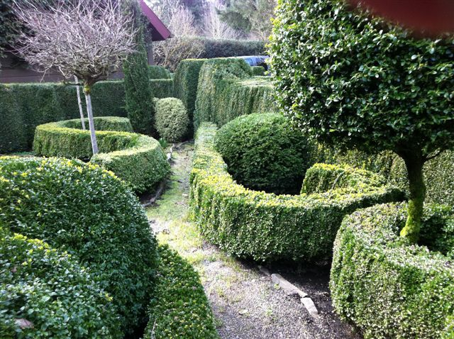 Boxwood garden hedges and edges for Garden hedge designs