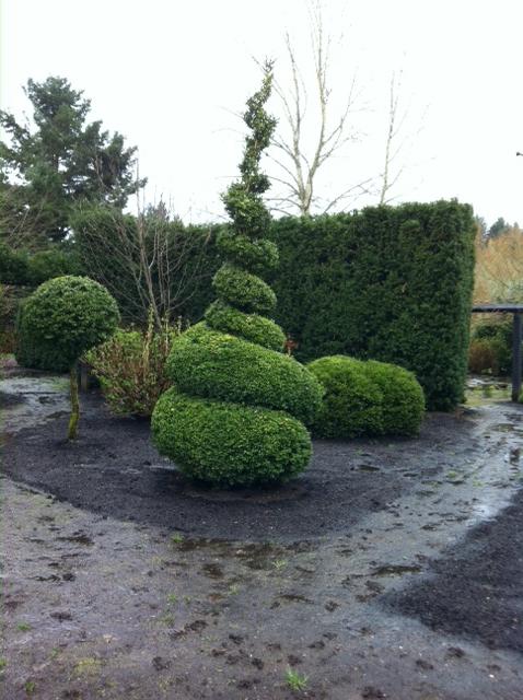 Boxwood Garden :: Topiary